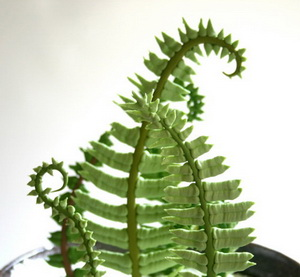 Edible Sugar Ferns & Finddle Heads cake topper