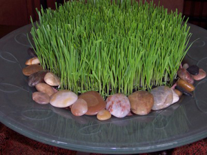 wheat grass-centerpieces-zen