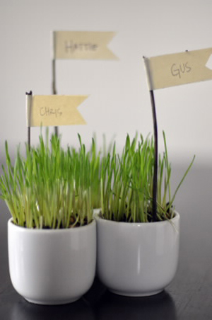 unique-place-card-holders-wheatgrass